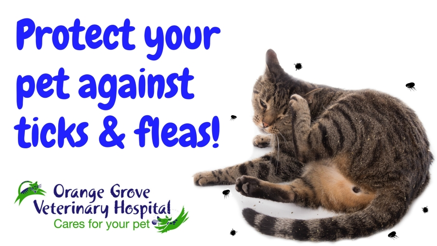 Preventing pesky parasites on your pets!